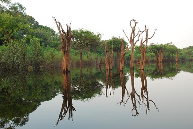 Amazonas en Brasil. Foto © Silvia Lucero