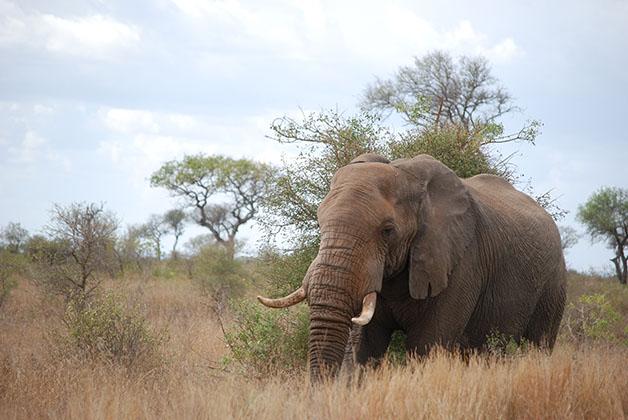 Parque Nacional Kruger en Sudáfrica. Foto © Silvia Lucero